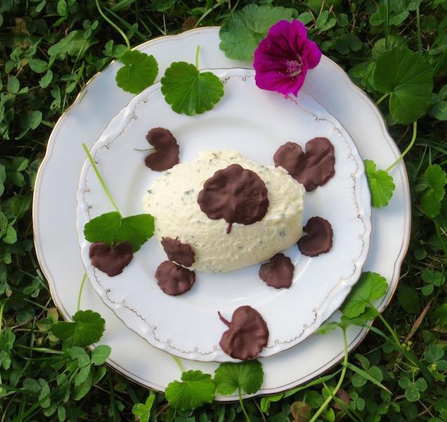 Gundelrebe Schokolade