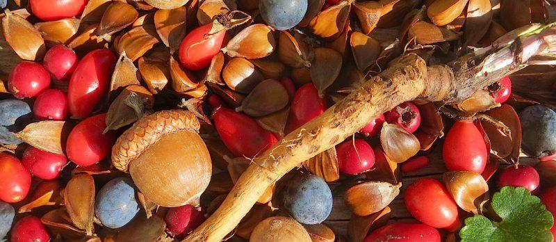 Vorräte aus der Wildnis anlegen –Wildfrüchte, Wurzeln, Samen