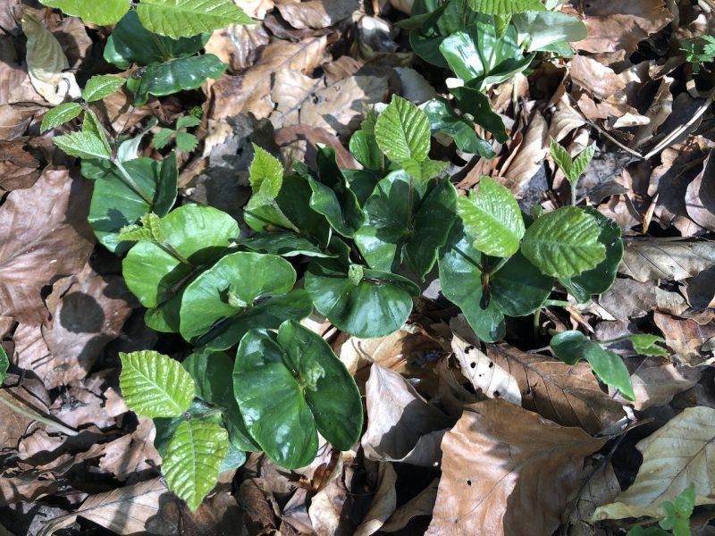 Junge Triebspitzen, Keimlinge, Blüten und Blätter –abgesagt, neuer Termin folgt!