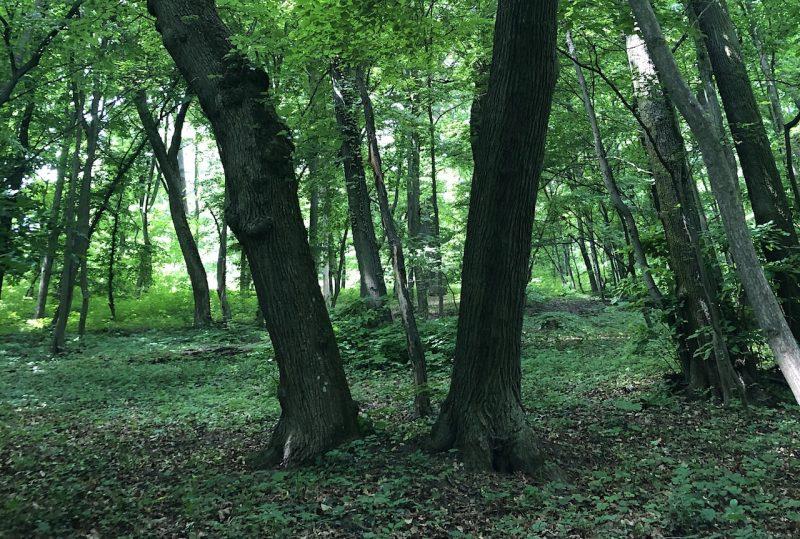 Wanderung: Selbstversorgung aus dem Wald –Wildkräuter, Bäume und Pilze